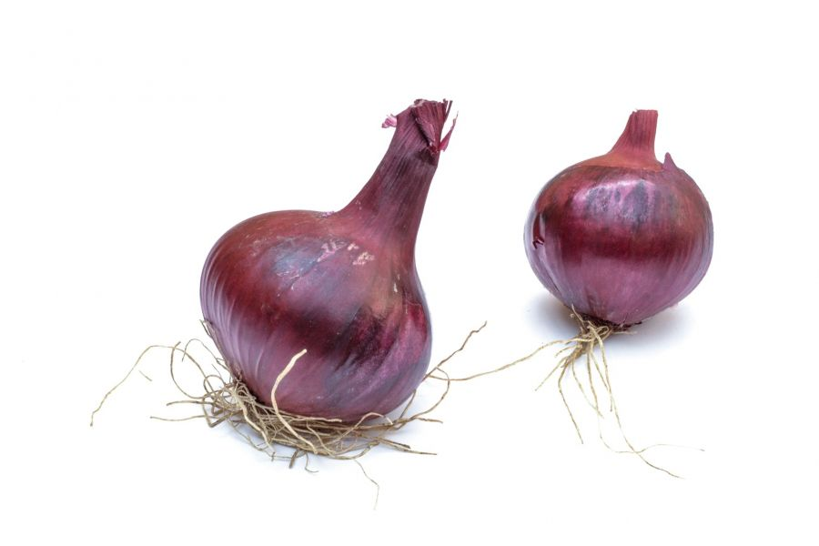 two purple onions