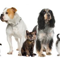 Human foods are not dog foods: Keep these substances away from your pet